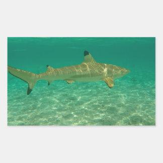 Shark in will bora will bora rectangular sticker
