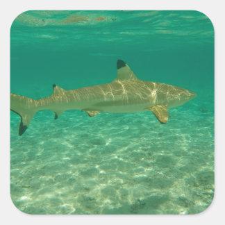 Shark in will bora will bora square sticker