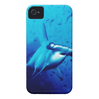 Shark iPhone 4 cover