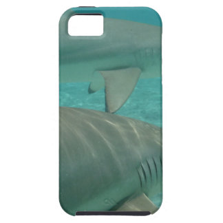 shark iPhone 5 case