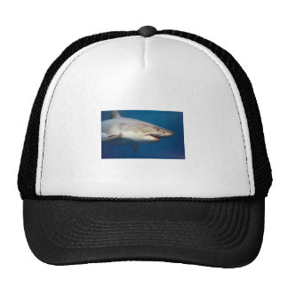 shark mesh hat