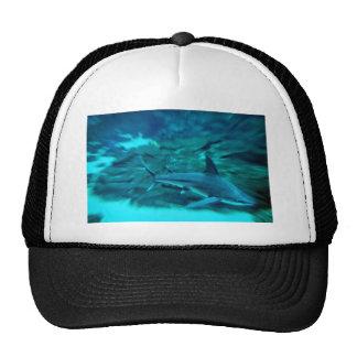 Shark on the hunt cap