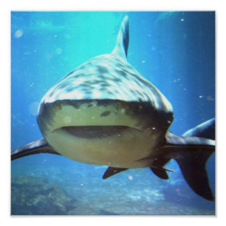 Shark Photo Print