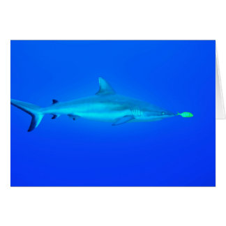 """Shark Play"" ~ Greeting Card 5x7"
