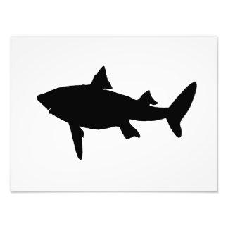 Shark Silhouette Photograph