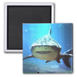 Shark Square Magnet