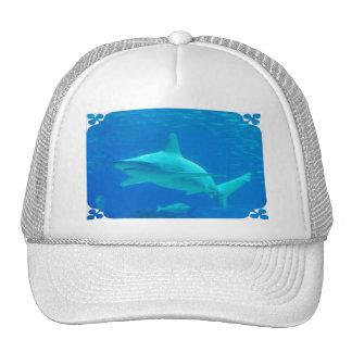 Shark Swimming Baseball Hat