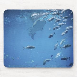 Shark Tank and Fish Aquarium Mouse Pad