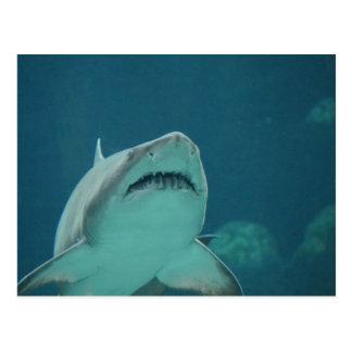 Shark Teeth Postcard