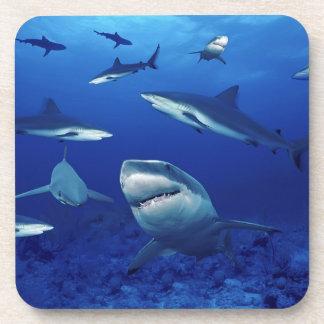Sharks Coaster Set