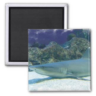 Sharks in Coral Reef Magnet