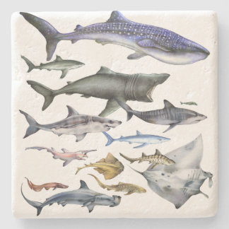 Sharks of the World Stone Coaster