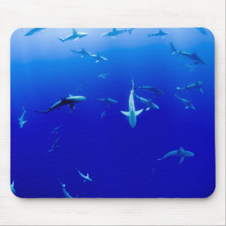 Sharks Underwater Mouse Pad