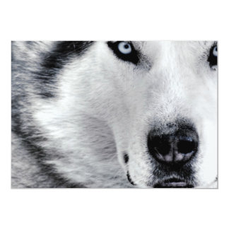 Sharp Eyed Wolf 13 Cm X 18 Cm Invitation Card