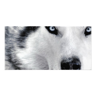 Sharp Eyed Wolf Customized Photo Card