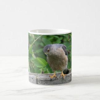 Sharp Shinned Hawk Watching Your Garden Coffee Mug