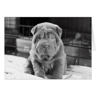 Sharpei Puppy Card