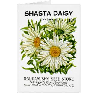 Shasta Daisy Vintage Seed Packet Card