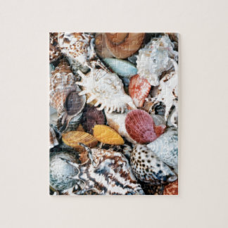 She Sells Sea Shells Puzzle