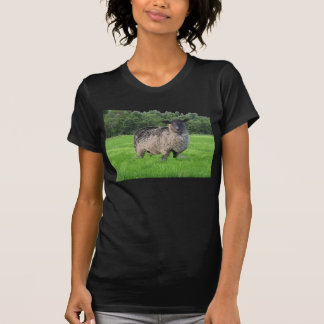 Sheal Ladies Twofer Sheer Fitted T Shirt
