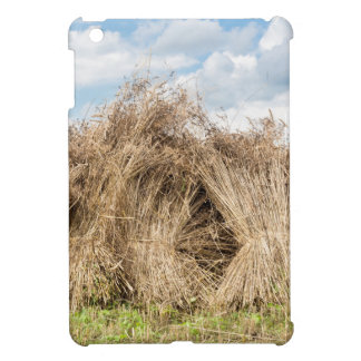 Sheaves of corn standing upright as group cover for the iPad mini