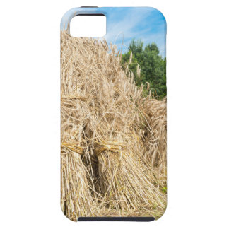 Sheaves of rye standing at rye field iPhone 5 cover