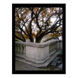 shedd aquarium :: autumn postcard