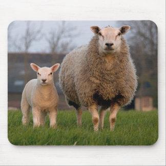 Sheep and Lamb Farm Animals Mouse Pad