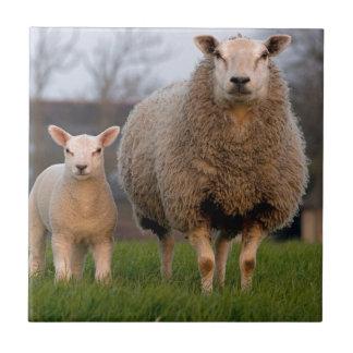 Sheep and Lamb Farm Animals Tile