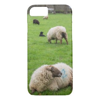 Sheep and Lambs iPhone case