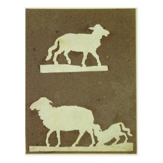 Sheep and Sheep with Lamb Postcard