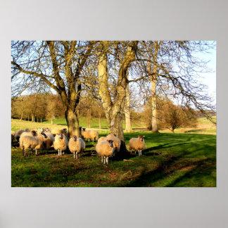 Sheep at Easter Poster