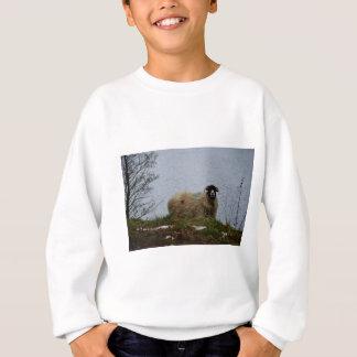 Sheep by the water sweatshirt