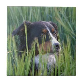 Sheep Dog in Grass Ceramic Tile