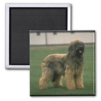 Sheep Dog Picture Square Magnet