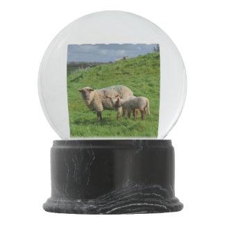 Sheep Family Snow Globe