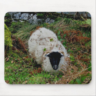 Sheep in  hideing on dartmoor mouse pad
