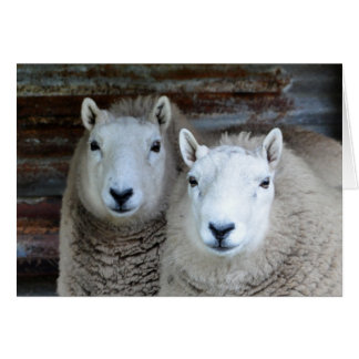 Sheep in Pairs! Card