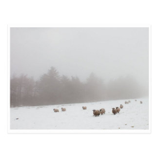 Sheep in the Mist Postcard