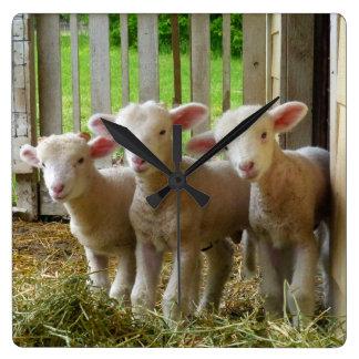 Sheep Lambs  Square Clock