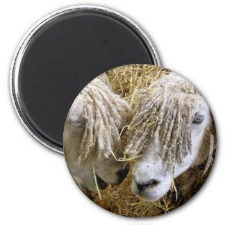 SHEEP FRIDGE MAGNETS