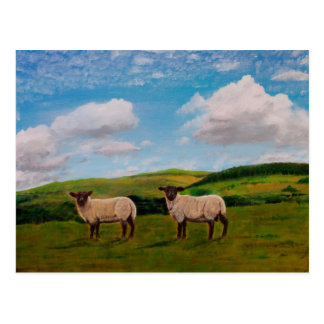 Sheep May Safely Graze Postcard