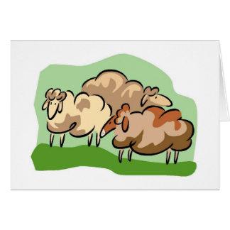 Sheep Notecards Card