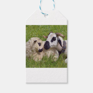 Sheep of Thones et Marthod Gift Tags