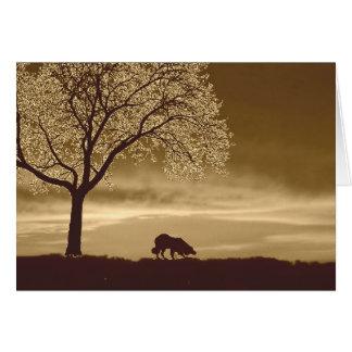 Sheep on the horizon~Border Collie Christmas Card