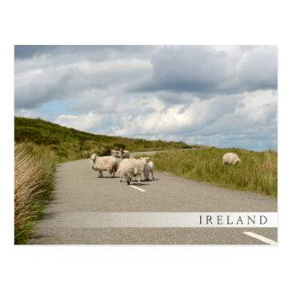 Sheep on the road in Ireland bar postcard