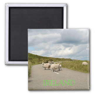 Sheep on the road in Ireland text magnet