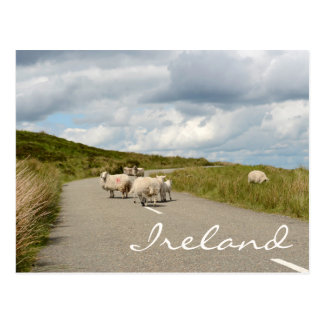 Sheep on the road in Ireland text postcard
