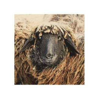 Sheep portrait on wood wood print