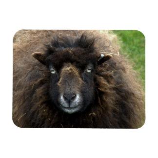 Sheep Rectangular Magnets